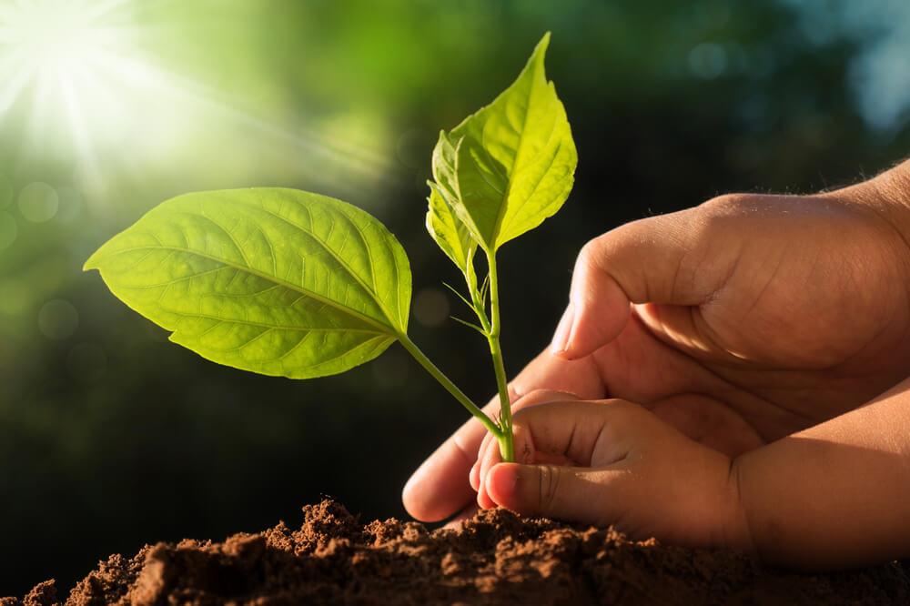 Hari Bumi, mari mulai menanam pohon